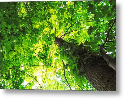 Metal Print featuring the photograph Sunlit Leaves by Lars Lentz