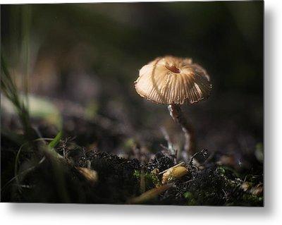 Sunlit Mushroom Metal Print by Scott Norris