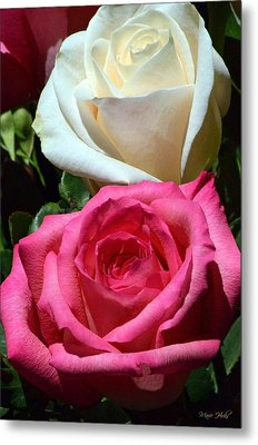 Sunlit Roses Metal Print by Marie Hicks