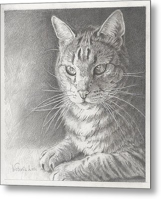 Sunlit Tabby Cat Metal Print by Victoria Lisi