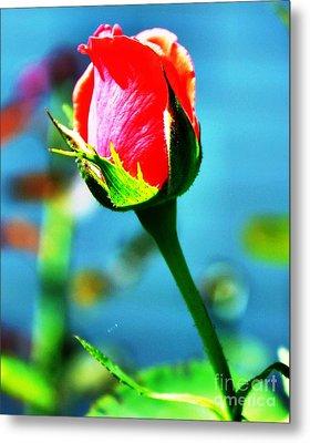 Sunlite Rose Bud Metal Print by Judy Palkimas