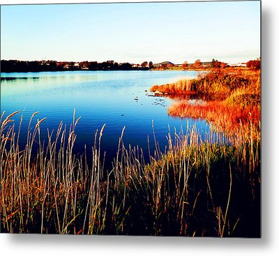 Metal Print featuring the photograph Sunny Afternoon by Zinvolle Art