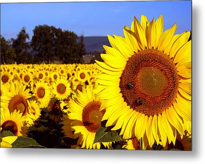 Sunny Day II Metal Print by Meaghan Troup