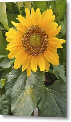 Sunny Day Metal Print by Sandy Molinaro
