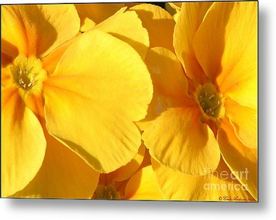 Sunny Disposition Metal Print by Chris Anderson