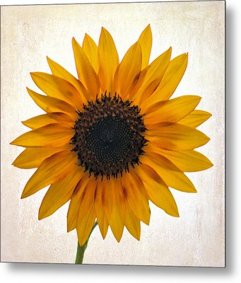 Sunny Disposition Metal Print by Tammy Espino