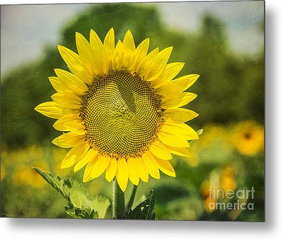 Sunny Face Metal Print by Terry Rowe