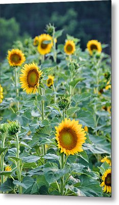 Sunny Faces Metal Print by Jan Amiss Photography