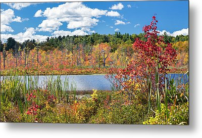 Sunny Fall Day Metal Print by Bill Wakeley