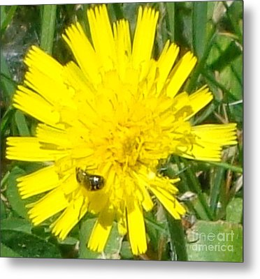 Sunny Lunch Metal Print by Christina Verdgeline