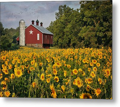 Sunny Morning Metal Print by Lori Deiter