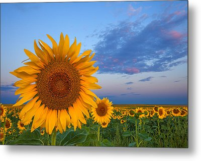 Sunny Side Up Metal Print by Darren  White