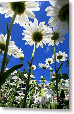 Sunny Side Up Metal Print by Pamela Clements