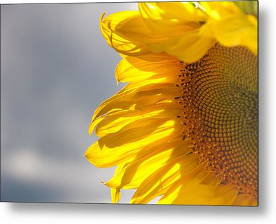 Metal Print featuring the photograph Sunny Sunflower by Cheryl Baxter