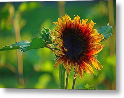 Sunny Sunflower Metal Print by Denise Darby
