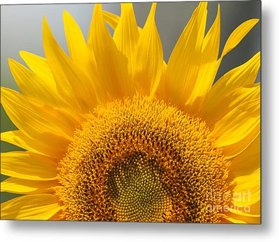 Sunny Sunflower Metal Print by Olivia Hardwicke