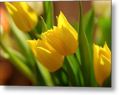 Sunny Tulips Metal Print by Erin Kohlenberg