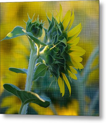 Sunny With Texture Metal Print by Rima Biswas