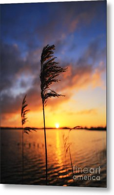 Sunrise @ The Lake Metal Print by LHJB Photography