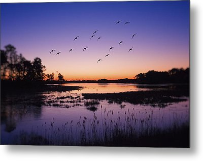 Sunrise At Assateague - Wetlands - Silhouette  Metal Print