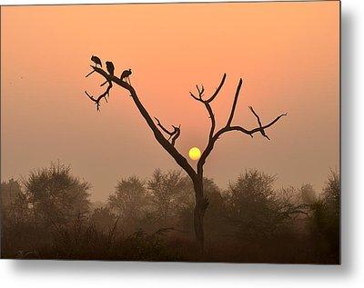 Sunrise At Bharatpur Metal Print by Fotosas Photography