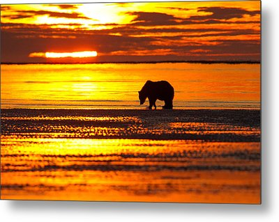 Sunrise Bear Metal Print