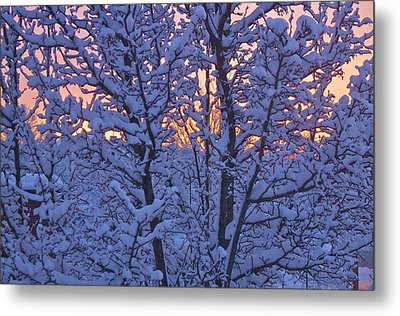 Metal Print featuring the photograph Sunrise Branches by Alice Mainville