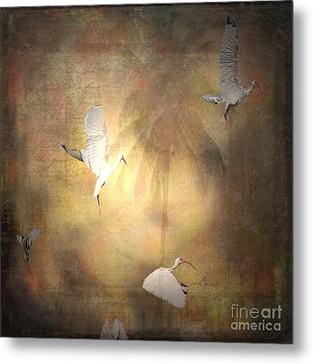 Sunrise Flight Metal Print by Irma BACKELANT GALLERIES