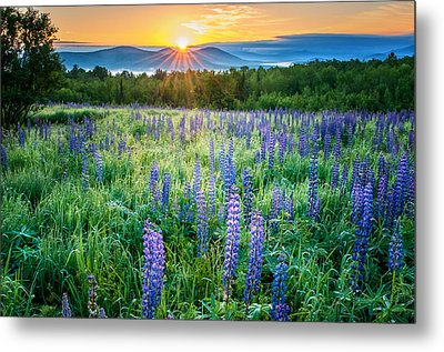 Sunrise From Sampler Fields - Sugar Hill New Hampshire Metal Print