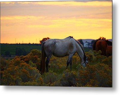 Metal Print featuring the photograph Sunrise Horse by Lynn Hopwood