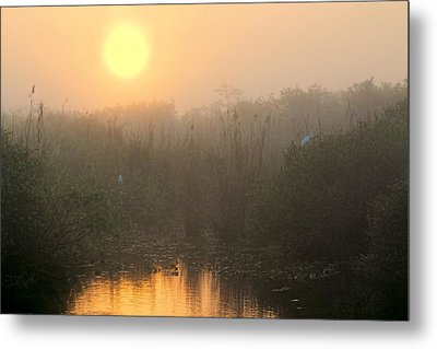 Sunrise In The Everglades Metal Print by Rudy Umans