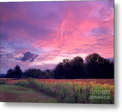 Sunrise In The South Metal Print by T Lowry Wilson