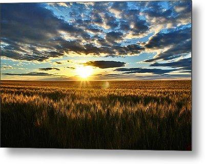 Sunrise On The Wheat Field Metal Print by Lynn Hopwood