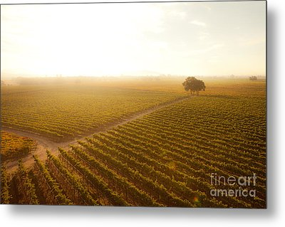 Sunrise Over The Vineyard Metal Print by Diane Diederich