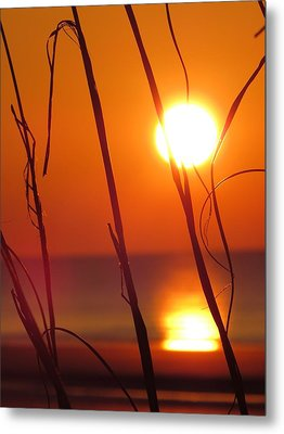 Metal Print featuring the photograph Sunrise Plant by Nikki McInnes