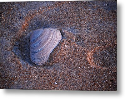 Sunrise Shell Metal Print