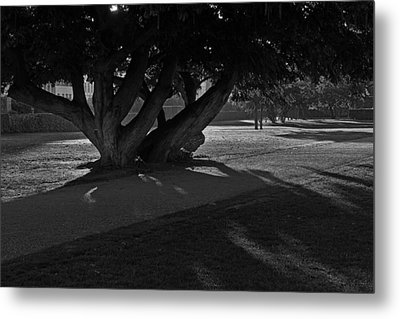 Metal Print featuring the photograph Sunrise Through Old Tree by Inge Riis McDonald
