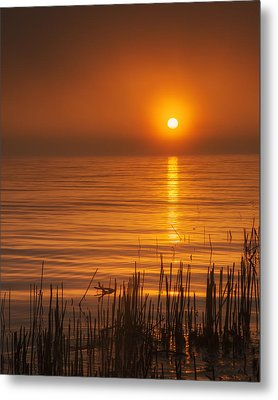 Sunrise Through The Fog Metal Print by Scott Norris
