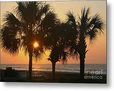 Sunrise Through The Palms Metal Print by Kevin McCarthy