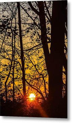 Sunrise Through Trees Metal Print