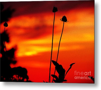 Sunset 365 20 Metal Print by Tina M Wenger