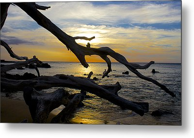 Driftwood At Sunset On Beach '69 Metal Print by Venetia Featherstone-Witty