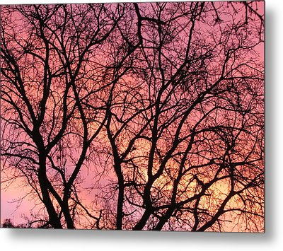 Sunset Behind The Trees Metal Print by Debra Madonna
