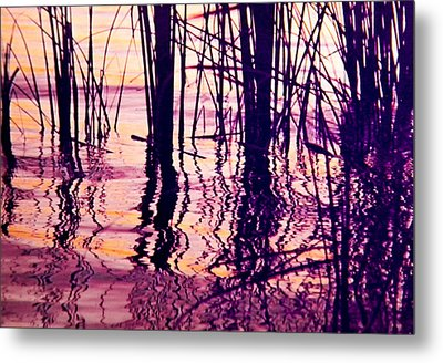 Sunset Cattails Metal Print by Christy Usilton