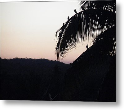 Metal Print featuring the photograph Sunset Chorus by Brian Boyle