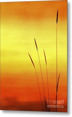 Metal Print featuring the photograph Sunset by Christopher Mace