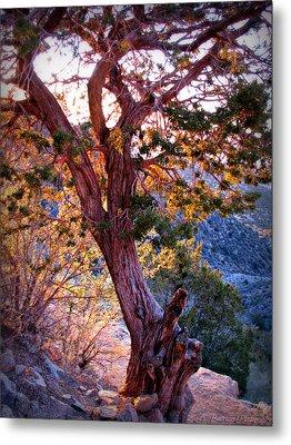 Sunset Colors Of A Juniper Tree Metal Print