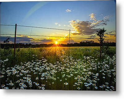 Sunset Daisies Metal Print by Jean Hutchison