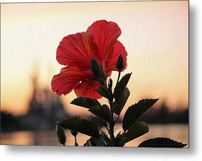 Metal Print featuring the photograph Sunset Flower by Cynthia Guinn