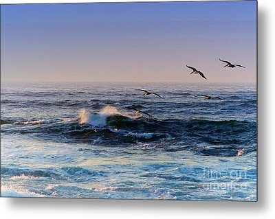 Sunset Fly Metal Print by Kathy Bassett